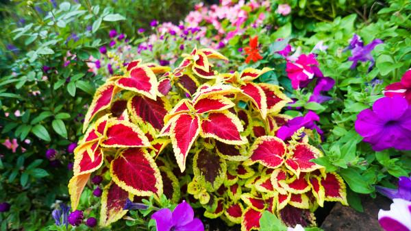 La llamativa cretona for Plantas de interior decorativas