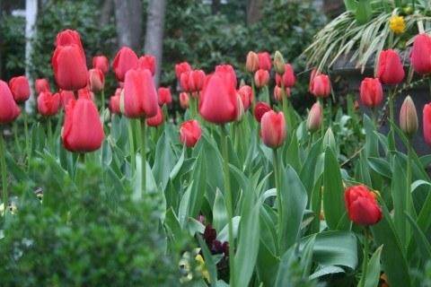 plantas-primavera