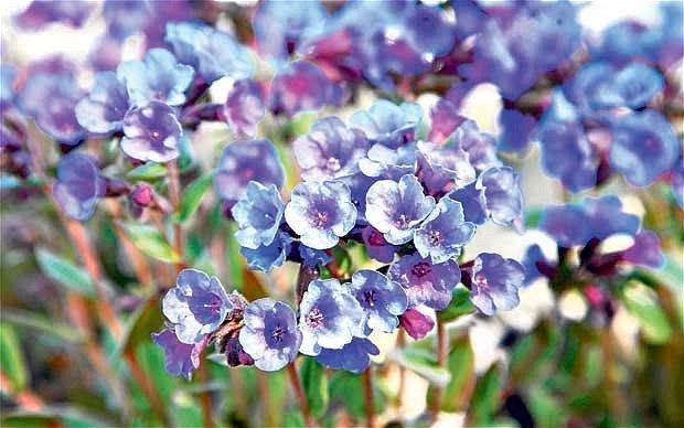 spring-plant_1851502b