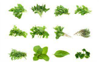erbe-aromatiche_aromatic-herbs