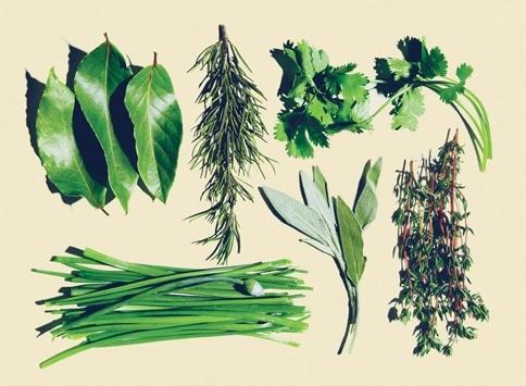 tipos-hierbas