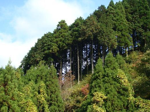 forestacion.JPG
