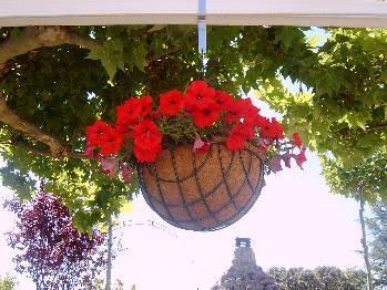 Para las plantas de interior macetas colgantes - Plantas colgantes interior ...