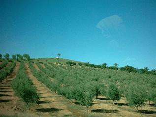 esjardineria04062009