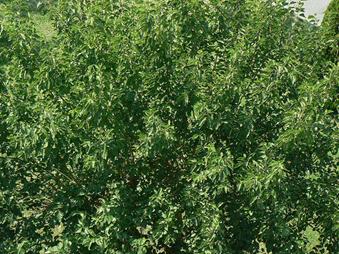 esjardineria16072009