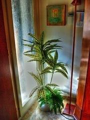 plantas de interior_10