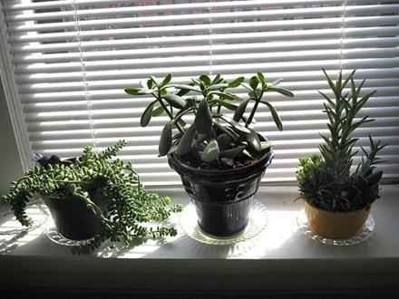 plantas de interior_11