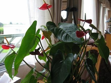 plantas de interior_12