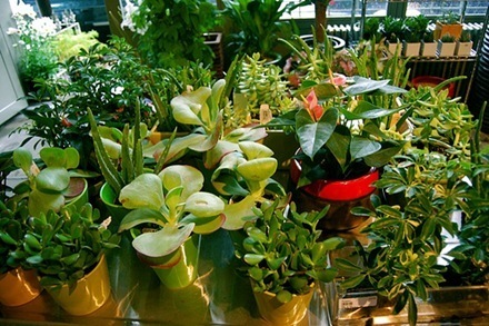 plantas de interior_5