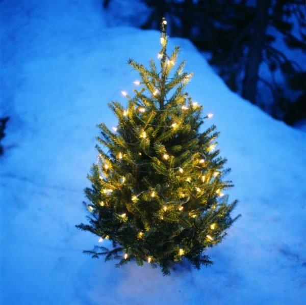 arboles-de-navidad-naturales-con-luces