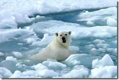 Las consecuencias del calentamiento global