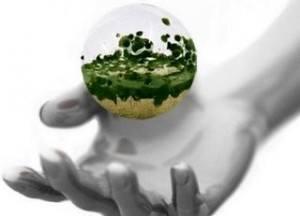 La importancia de la cultura ambiental