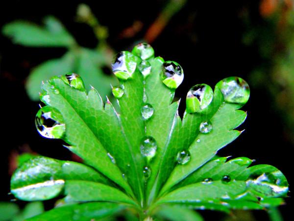 C mo eliminar los hongos de las plantas for Como combatir los bichos de la humedad
