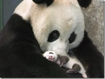 oso_panda_mama