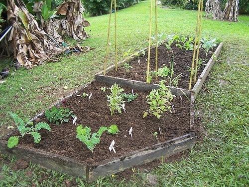 en los huertos caseros se pueden cultivar tomates cultivar fresas lechugas patatas zanahorias esprragos espinaca coliflores calabazas y muchsimo
