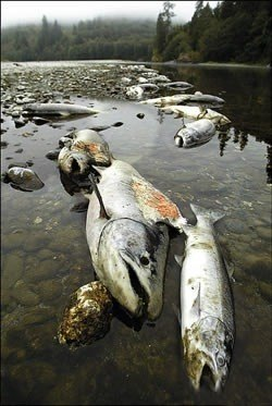 Fotos Contaminacion