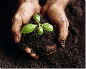 compost_thumb.jpg