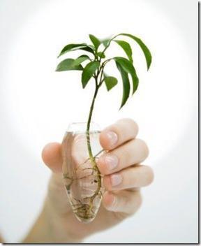 planta-hidrop-en-mano