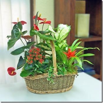 plantas-interior-hogar-2