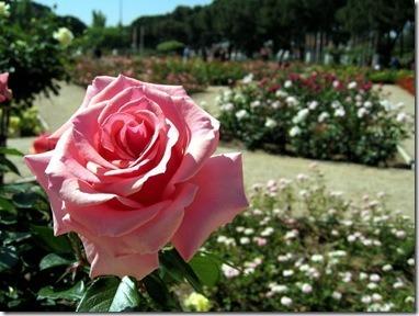 13-enero-2011-09-32-00-espana-jardineria_detalle_media