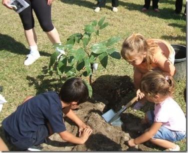 Consejos-para-plantar-árboles-11-400x324