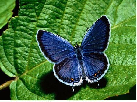 La importancia de preservar las plantas y animales en peligro 2