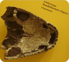 Ichthyostega