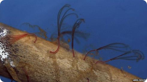 gusanos zombi