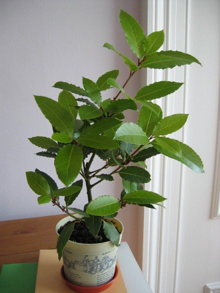 nutrientes-plantas-1