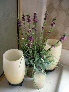 Plantas para decorar el ba o - Plantas en el bano ...