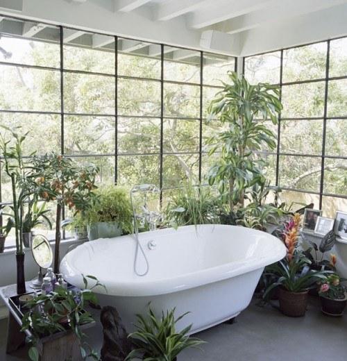 Plantas para decorar el ba o - Decorar pared bano ...