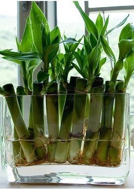 Plantas para decorar el ba o for Plantas naturales para decorar interiores
