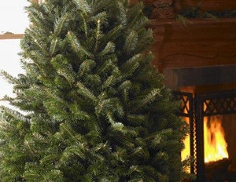 C mo cuidar el arbol de navidad natural - Cuidados planta navidad ...