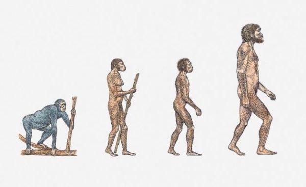 evolucion-que-es