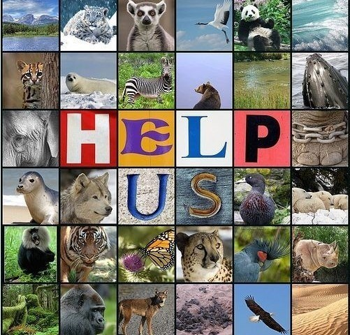 La importancia de preservar las plantas y animales en peligro