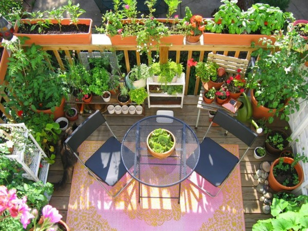cual-es-la-planta-del-dinero-decoracion-terrazas