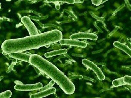 Bacterias contra la sequía