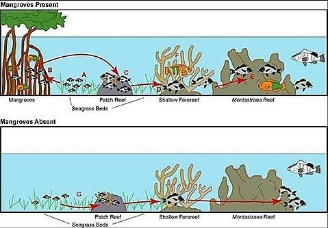 manglares y arrecifes