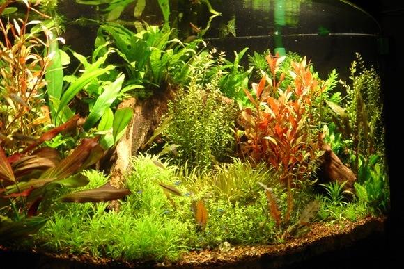 aquarium_plants