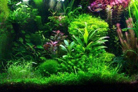 consejos-plantas-acuario