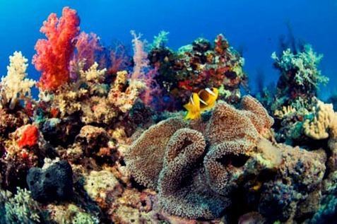 ¿Qué es un arrecife de coral?