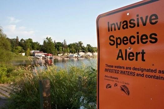 Especies invasoras, efectos en el ecosistema