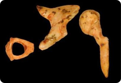huesecillos fósiles del oído