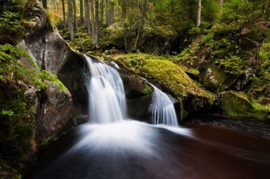 black-forest-beauty-13