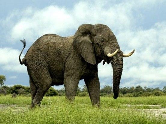 el animal más fuerte del mundo