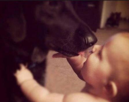 Perros y bebé