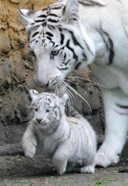 Ternura fotos animales 6