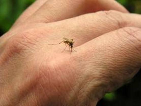 picadura-mosquito_thumb.jpg
