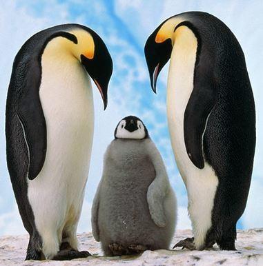 pinguino-emperador.jpg