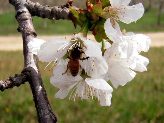 preservar las plantas y animales en peligro